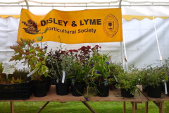 Flowers on display at the annual Disley show